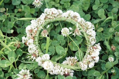 クローバー花冠